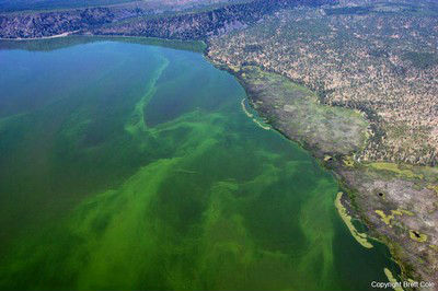 Klamath Lake Blue Green Algae